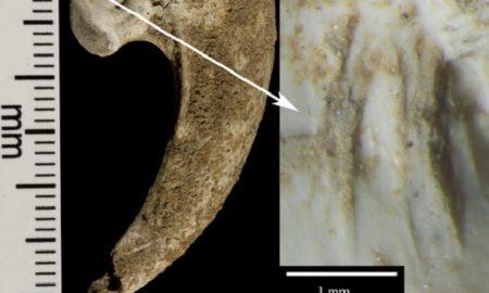 Neanderthal Eagle Talon Jewelry