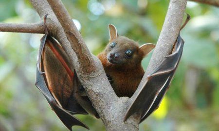 Bat Like Dinosaur