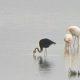 Black Flamingo Salt Lake