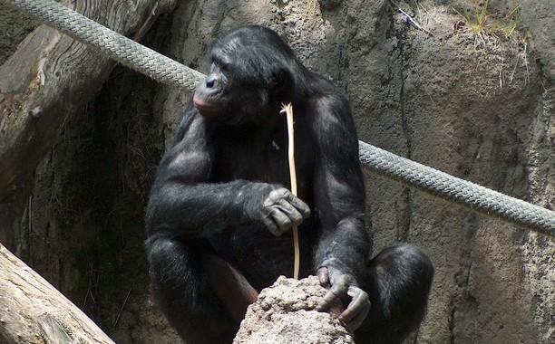 [Obrazek: chimp-tool.jpg]