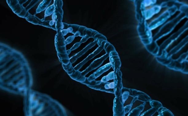 Die Entwicklung des, embryo w hrend