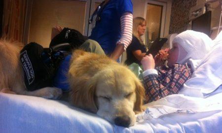 Seizure Service Dog