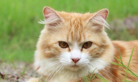 Cat Poop Parasite