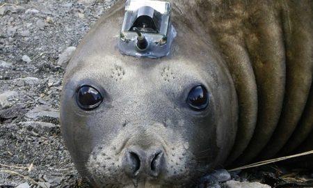 Elephant Seal Sensor