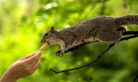 squirrel virus