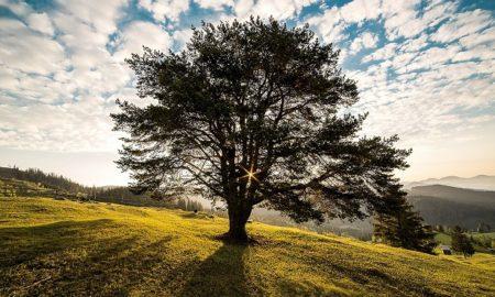 Tree Human Health