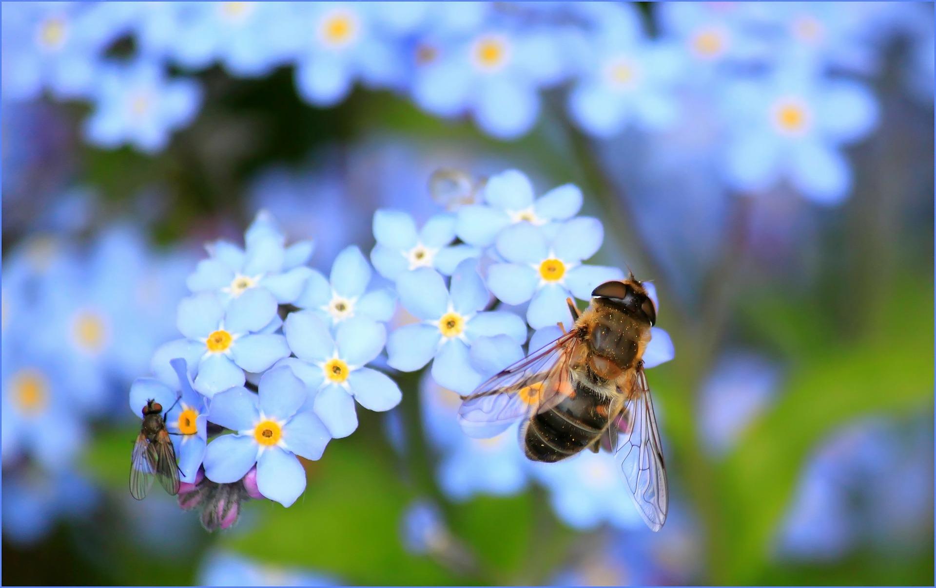 Caffeine Bee