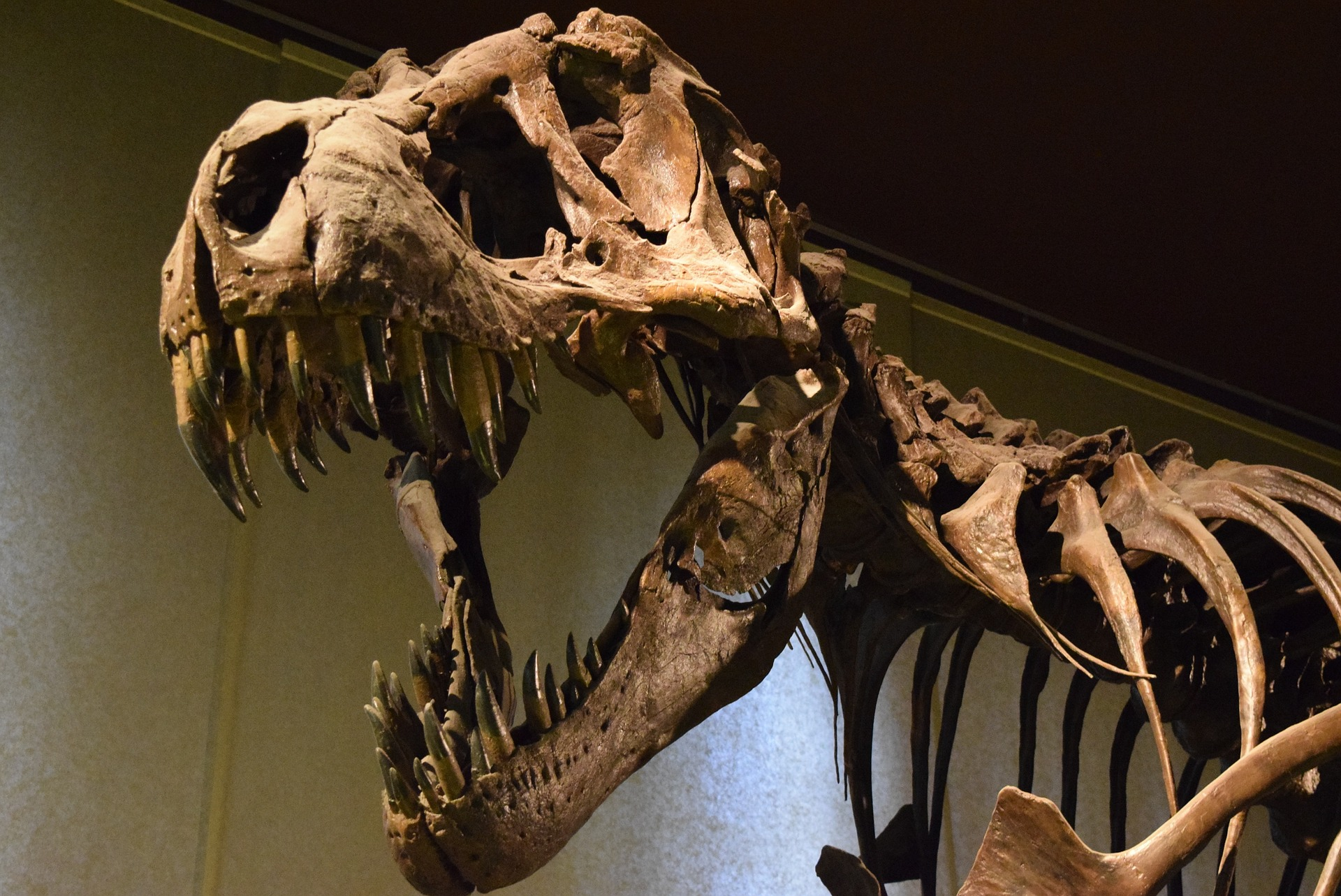 a history of the tyrannosaurus rex fossil named sue Tyrannosaurus sue has 345 ratings and 35 reviews  tyrannosaurus fossil ever found  it also told of the dramatic legal battle over sue, the t-rex fossil.
