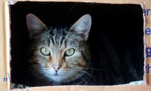 cat-829121_640