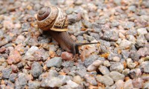 snail-221988_640