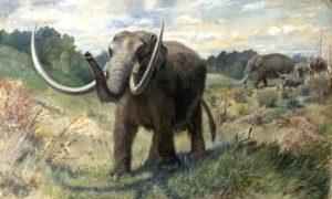 640px-knight_mastodon