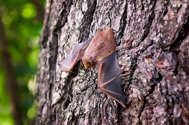 Decomposed bat found inside Fresh Express' organic salad