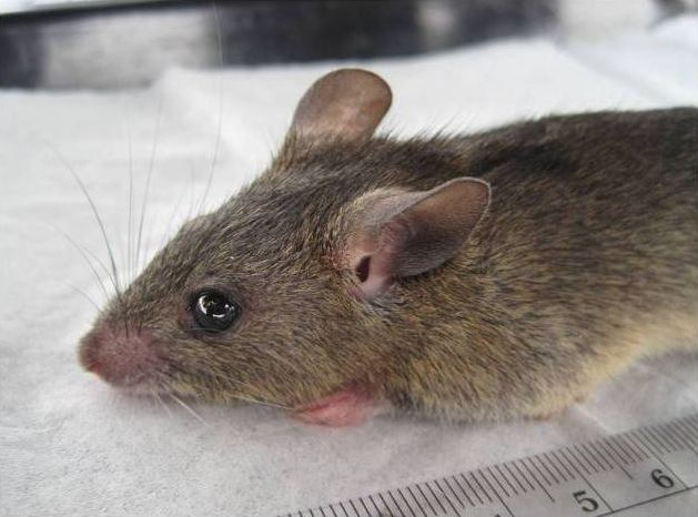 Death toll from Lassa fever rises to 110