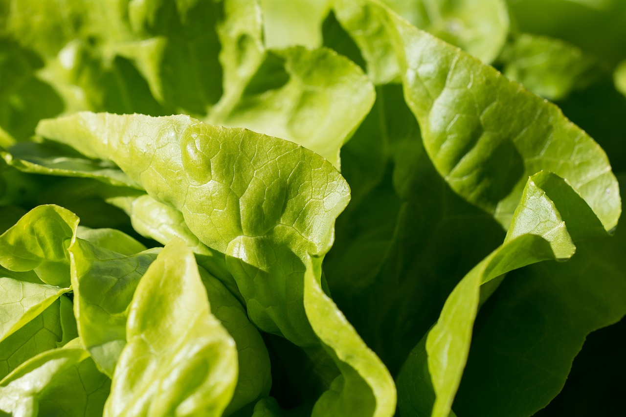 Louisiana reports E. coli case linked to chopped romaine lettuce